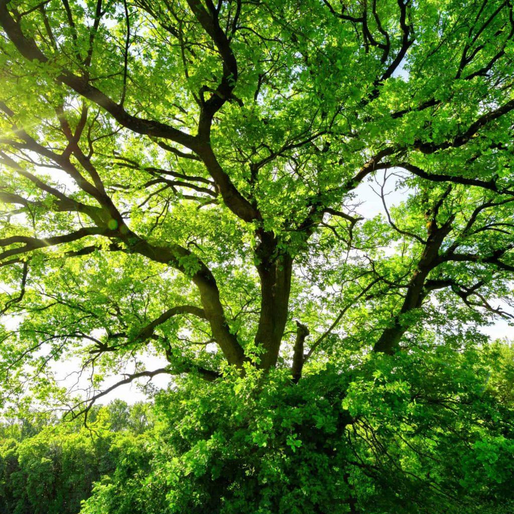Tag des Baumes square